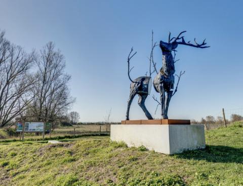 BEAUFORT - Monument for Cervus Vitalis #2 (Malus Sylvestris)